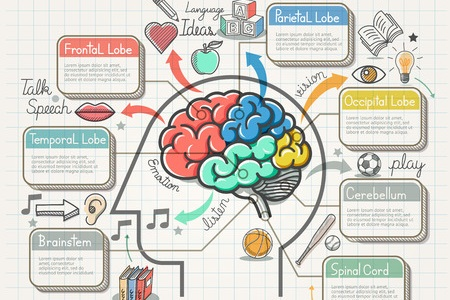 Understanding the memorization and learning processes
